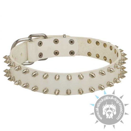 """White Rose"" Leather Pitbull Collar with Nickel Spikes"