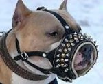 Royal Spiked Leather Dog Muzzle for American Pit Bull Terrier