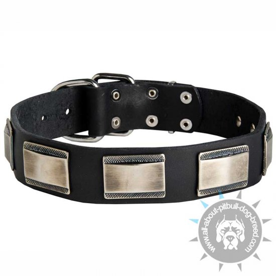 Luxury Leather Canine Collar with Large Nickel Plates for Pitbulls