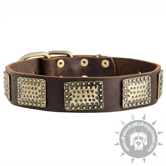 New Leather Dog Collar with Vintage Brass Plates For Pitbull