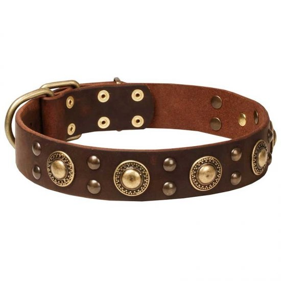 """Space-like"" Leather Pitbull Collar with Brass Circles"
