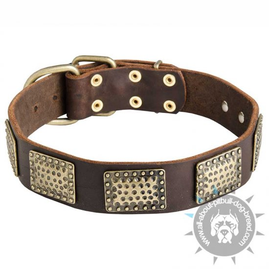 Luxury Leather Dog Collar for Pitbull