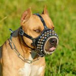 Royal Pyramids with Studs Leather Dog Muzzle for Pitbulls