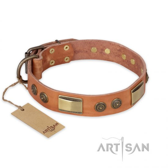 """Lost Desert"" FDT Artisan Leather Pitbull Collar with Brass Decorations"