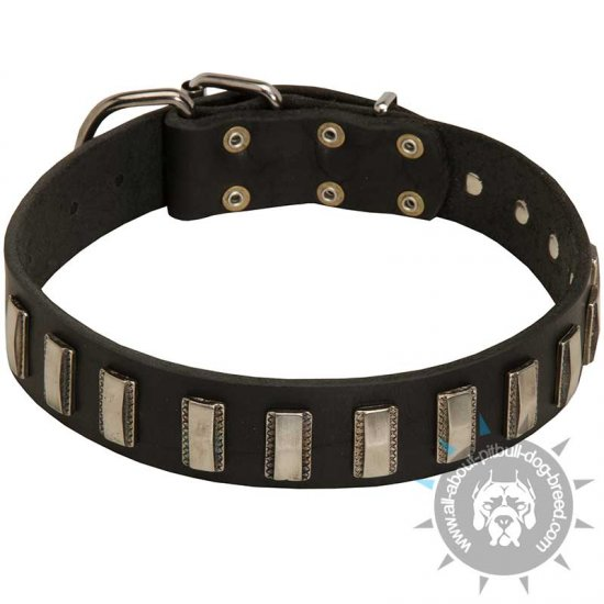 Classy Leather Dog Collar with Glaring Vertical Plates for Pitbull Dog