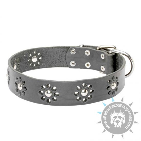 """Flower Blues"" Leather Pitbull Collar with Stunning Decor"