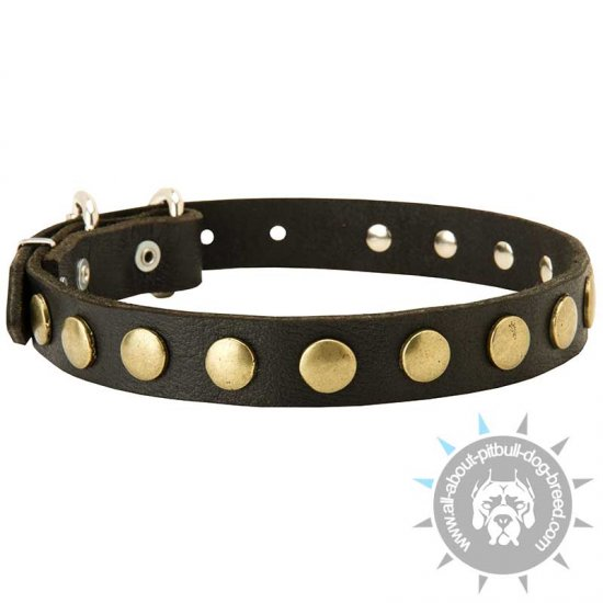 Pitbull Leather Dog Collar With Brilliant Circles