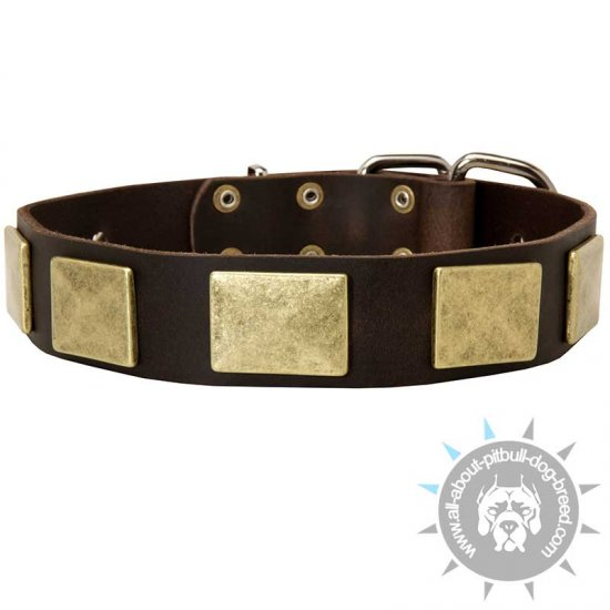 Showy Leather Dog Collar with Large Brass Plates