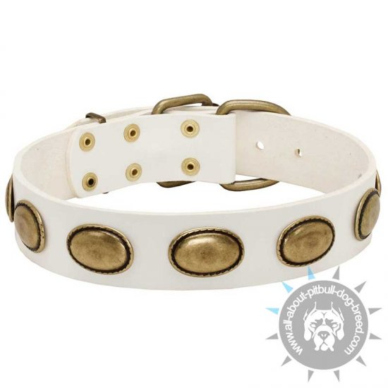 Fashion White Leather Pitbull Collar with Brass Oval Plates