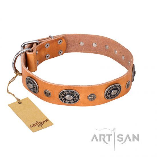 """Twinkle Twinkle"" FDT Artisan Incredible Studded Tan Leather Pitbull Collar"