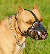 Best Art Leather dog muzzle for Pit bulls/ Pit Bull Terrier