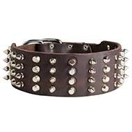 Extra Wide Leather Pitbull Collar with Spikes and Cones