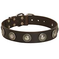 Gorgeous Wide Leather Dog Collar With Silver Conchos for Pitbull