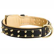 New Fashioned Leather Pitbull Collar with Goldish Rows of Spikes