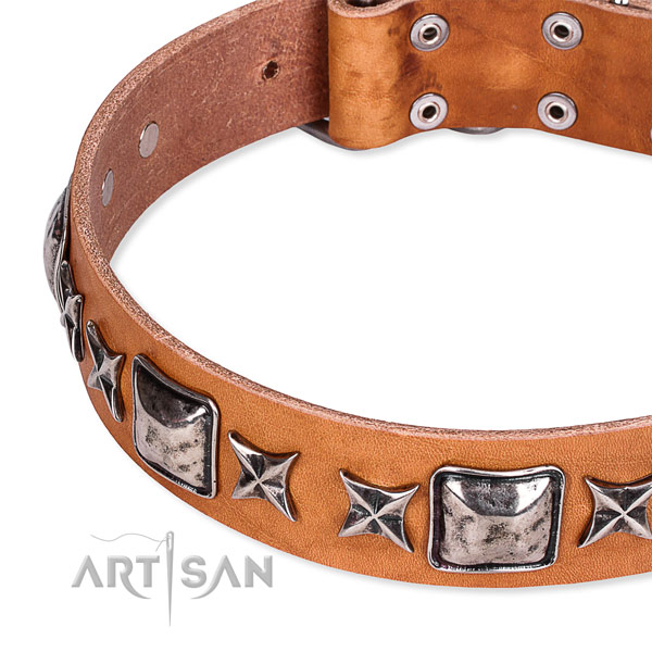 Walking embellished dog collar of fine quality full grain leather