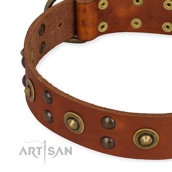 Genuine leather collar with durable fittings for your attractive four-legged friend