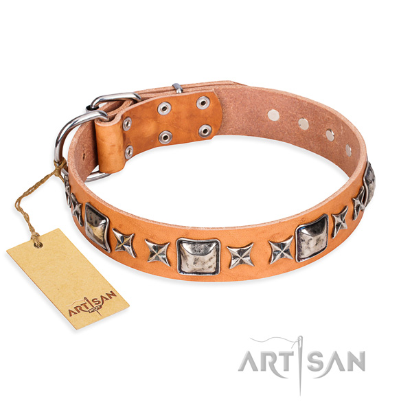 Basic training dog collar of quality full grain natural leather with studs