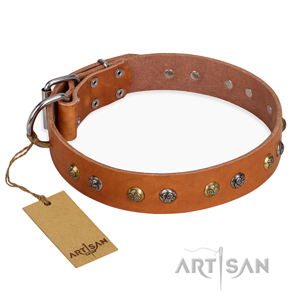 Fancy walking trendy dog collar with corrosion resistant hardware