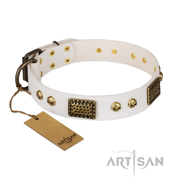 Corrosion resistant studs on daily use dog collar