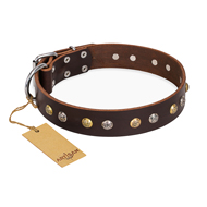 """Golden""n""Silver Luxury"" FDT Artisan Leather Pitbull Collar with Engraved Studs"