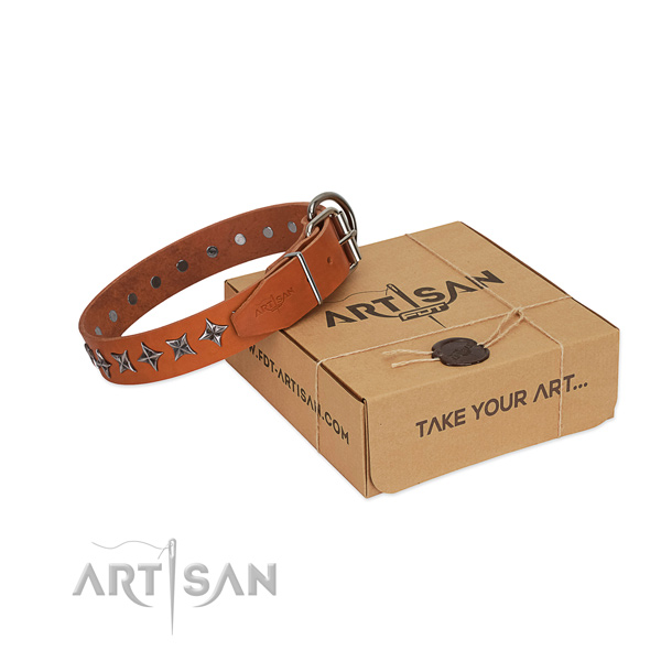 Daily walking dog collar of strong full grain natural leather with adornments