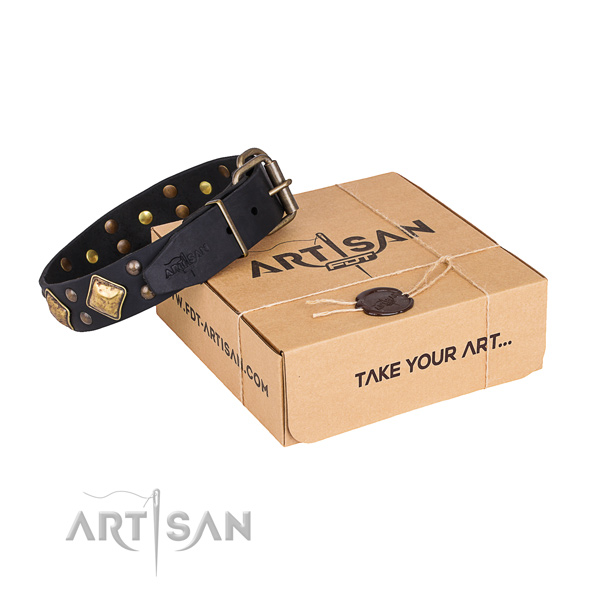 Everyday walking dog collar with Stunning corrosion proof studs