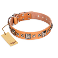 """Glamour Finery"" FDT Artisan Female Pitbull collar of natural leather with stylish old-looking circles"