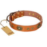 """Dandy Pet"" FDT Artisan Handcrafted Tan Leather Pitbull Collar"
