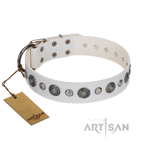 Reliable leather dog collar with corrosion resistant fittings