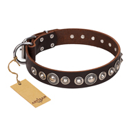 """Step and Sparkle"" FDT Artisan Glamorous Studded Brown Leather Pitbull Collar"