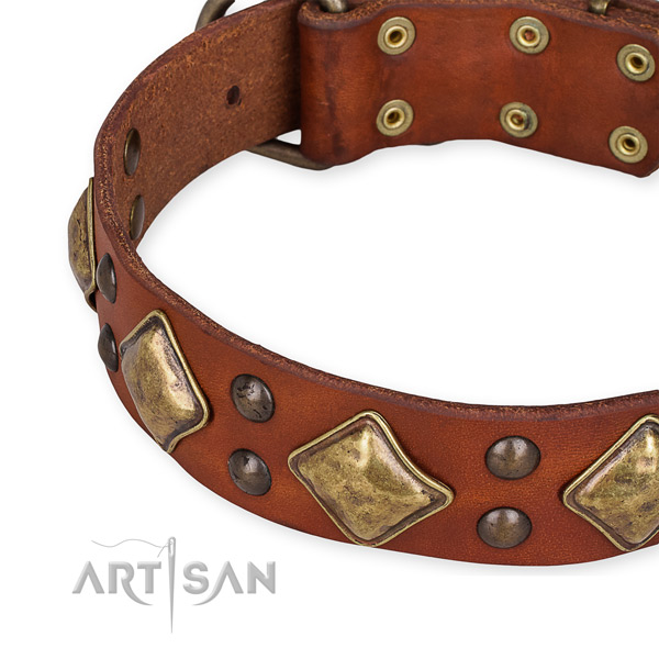 Leather collar with corrosion proof fittings for your stylish doggie