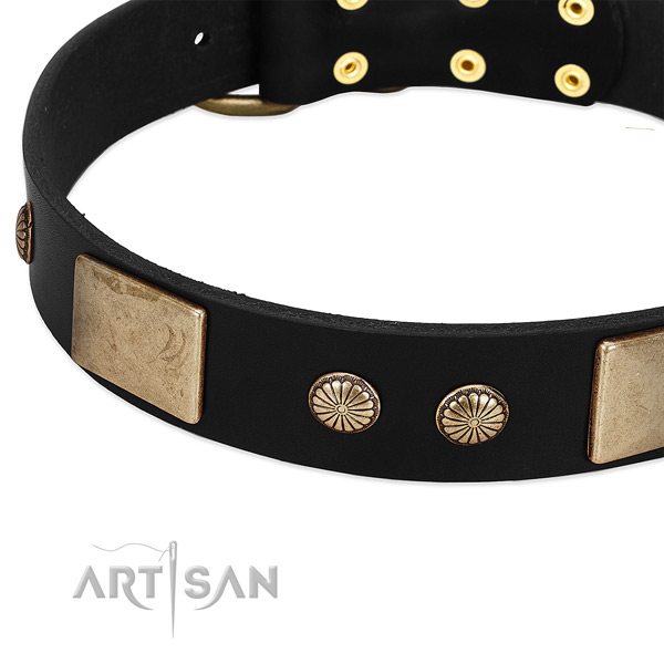 Full grain natural leather dog collar with studs for everyday walking