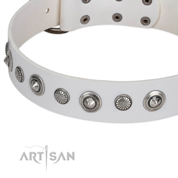 Natural leather collar with reliable fittings for your impressive canine