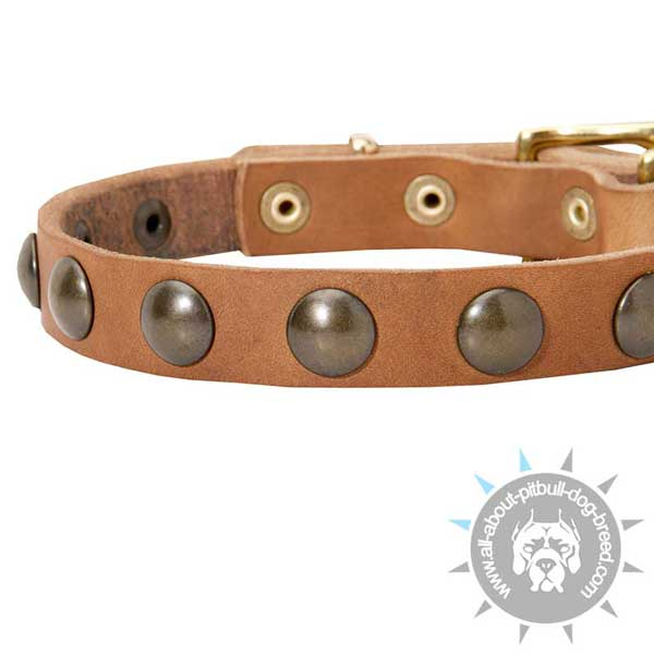 Fashionable decorated leather dog collar
