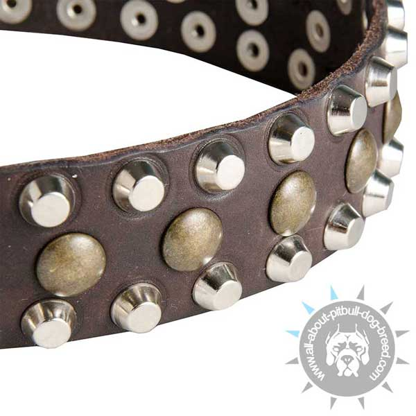 Studs and Pyramids on Leather Pitbull Collar