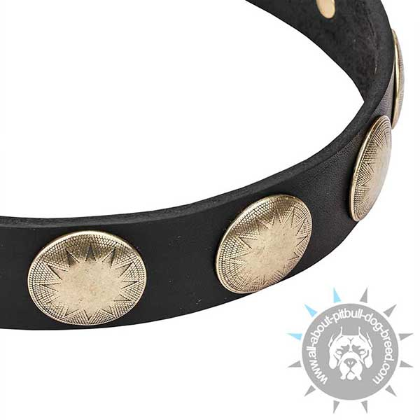 Engraved Brass Studs on Leather Pitbull Collar