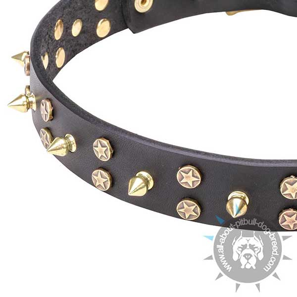 Brass Decorations on Leather Dog Collar