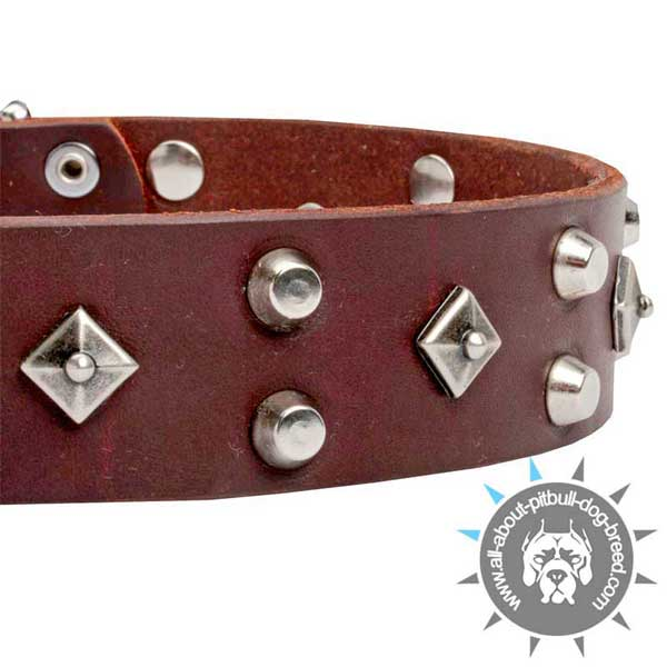 Posh Brown  Leather Pitbull Collar with Cones and Dotted Studs