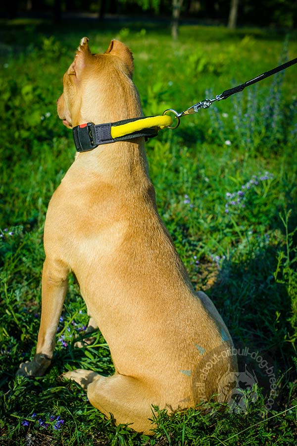 Water-proof nylon Pitbull collar