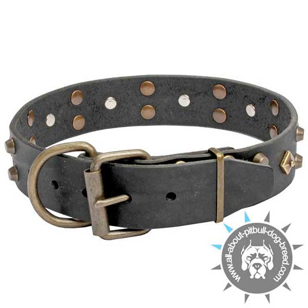 Posh Black Leather Pitbull Collar with Riveted Fittings