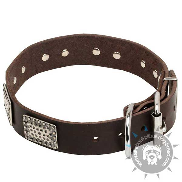 Decorated Leather Pitbull Collar