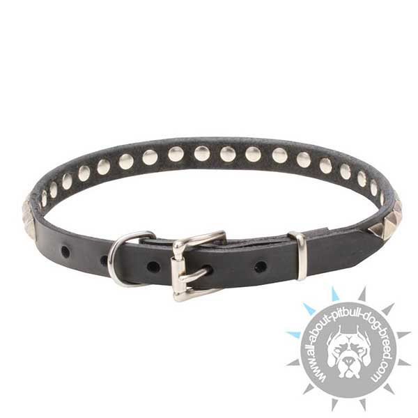 Studded Leather Collar with Chrome Plated Buckle and D-ring