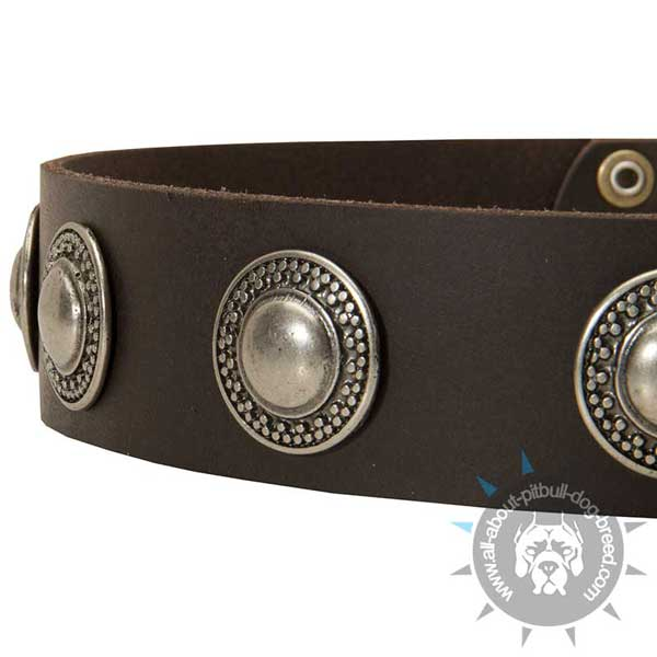 Decorated Leather Pitbull Collar for Walking