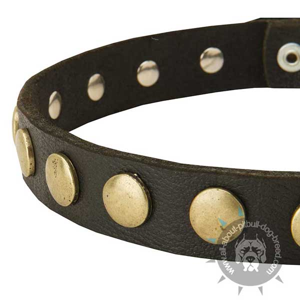 Stylish Pitbull Collar of Genuine Leather