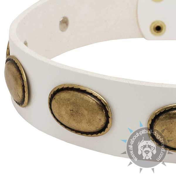 White leather dog collar adorned with antique brass plates