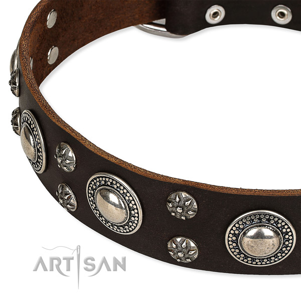 Easy to adjust leather dog collar with extra strong brass plated fittings