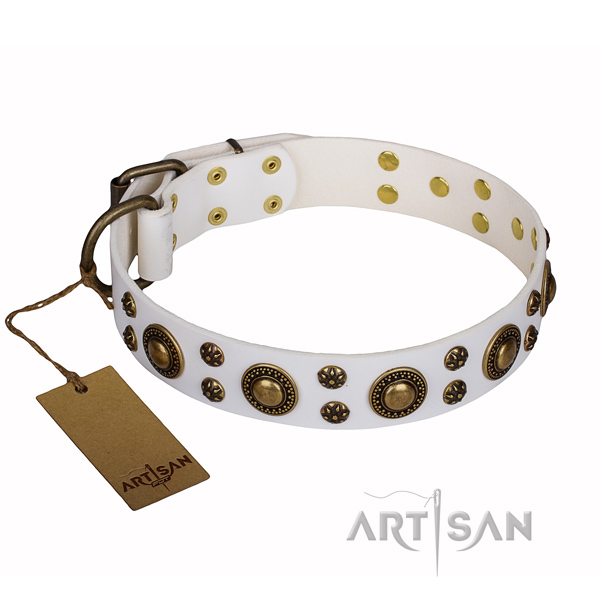 Stunning leather dog collar for walking