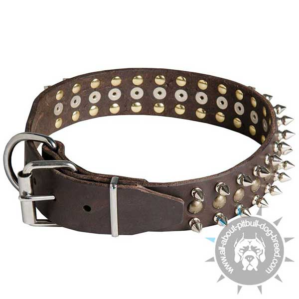 Pitbull Leather Collar with Nickel Plated Hardware