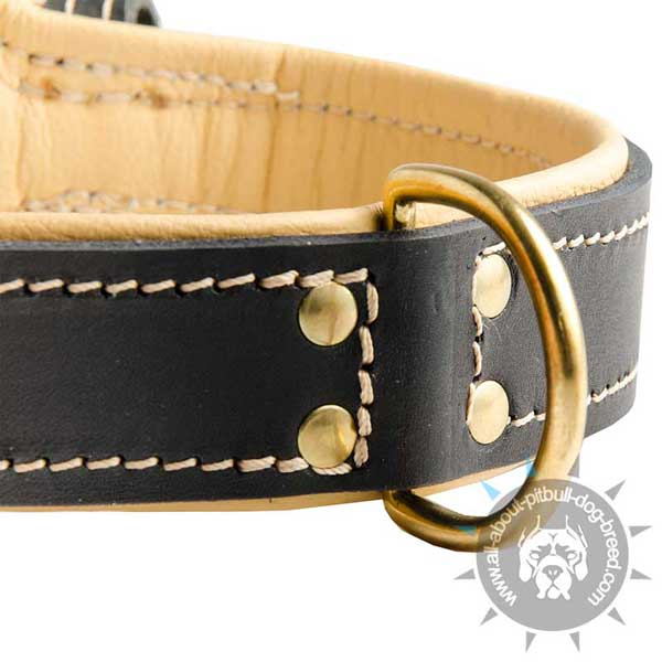 Designer leather dog collar for multifunctional use