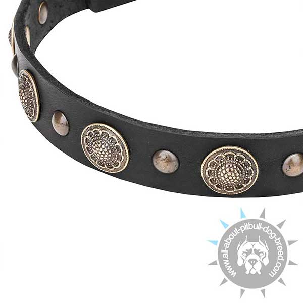 Premium Leather Dog Collar Elegand and Dainty